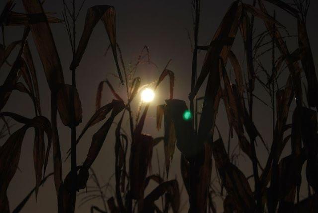 scary field